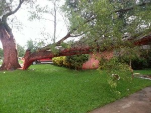 Part of a large tree fell on the Ennis home of Samantha Slovak during Saturday morning's storms.