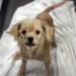Italy dog seized by SPCA of Texas.